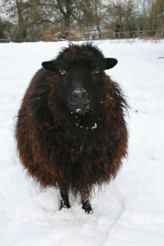 Sheep News from la Ferme de la Baie